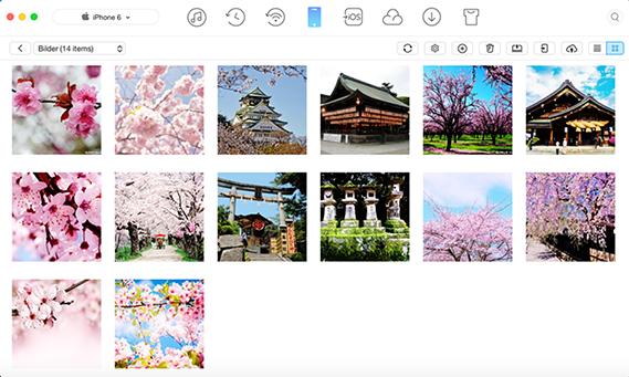 Fotos mit Siri suchen