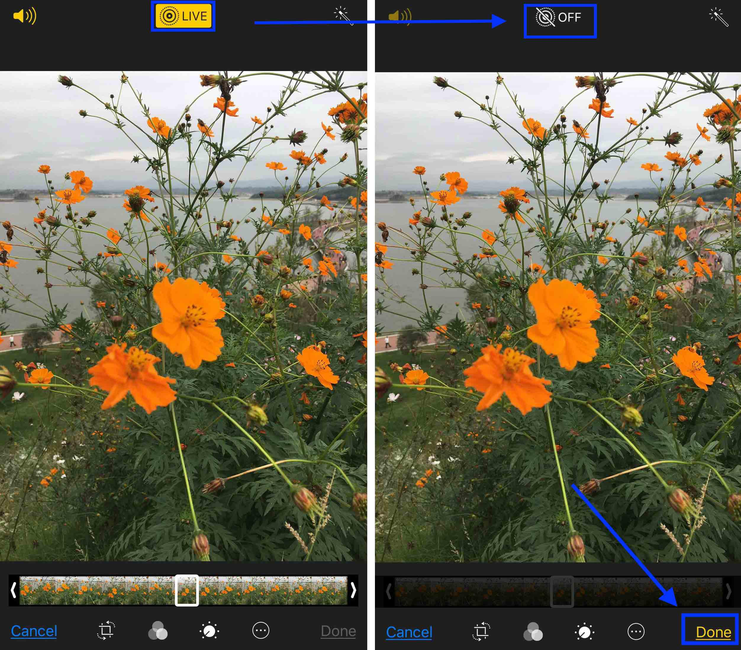 How to Take A Still from A Live Photo by Photo Editing - Step 2